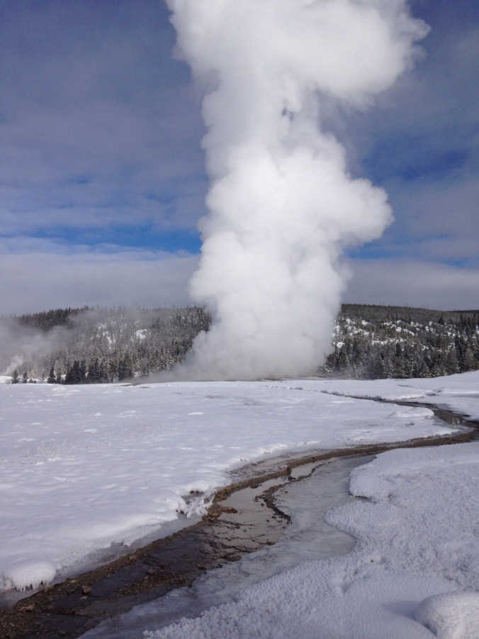 Old Faithful, erupting into steam.