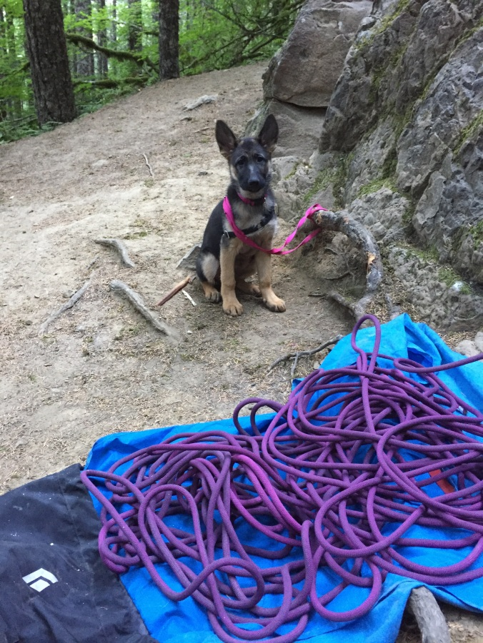 Crag dog in practice.